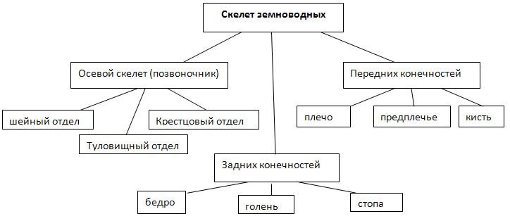 ГДЗ решебник по биологии 9